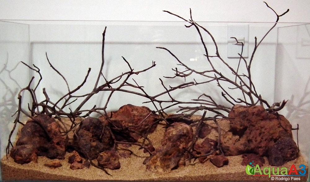 1-Evolução-O-Vermelho-de-Rodrigo-Paes