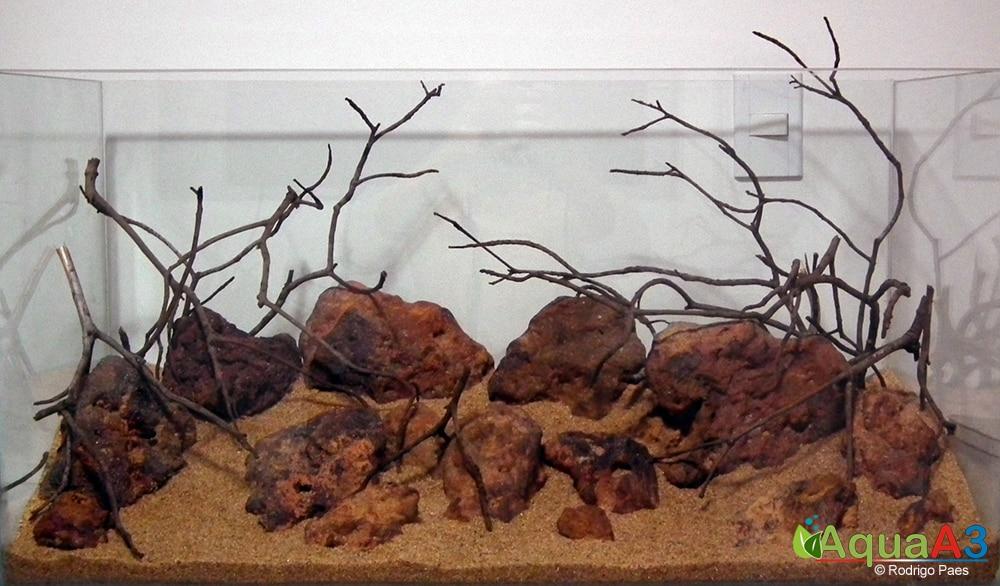 2-Evolução-O-Vermelho-de-Rodrigo-Paes