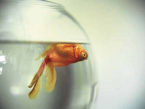 данном дохнут рыбы в аквариуме сайте