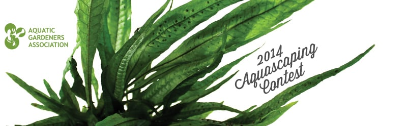 AGA Aquascaping contest 2014