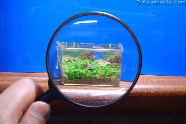 Aquário miniatura