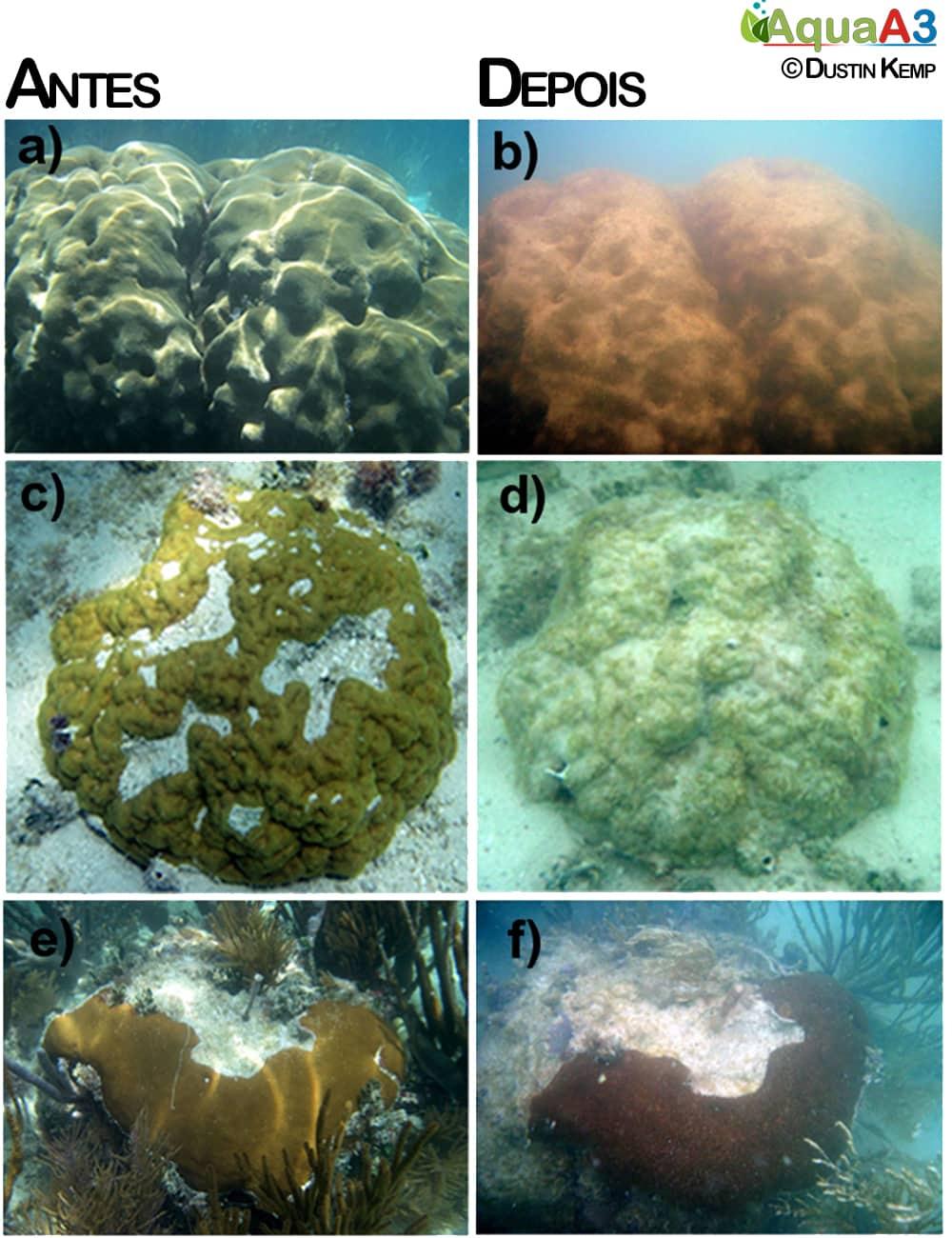 Aquecimento global corais marinhos