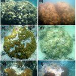Aquecimento global corais marinhos • Alerta: O Aquecimento global danifica corais vitais, diz ONU.