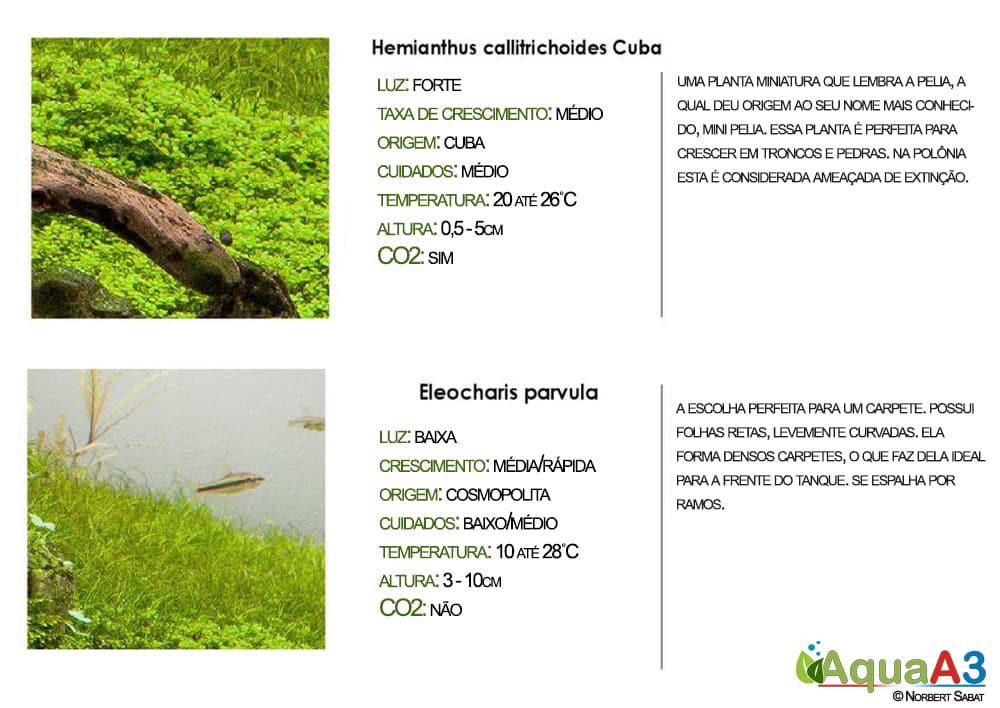 Hemianthus cubas e Eleocharis