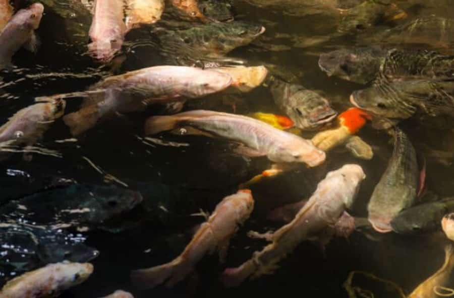 Inundação no shopping vira santuário de peixes na Tailândia