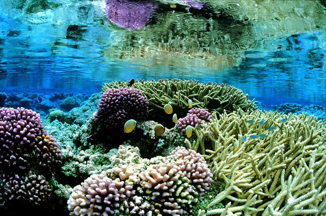 Obama propõe criação do maior santuário oceânico do mundo