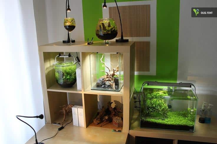 Pequenos aquarios
