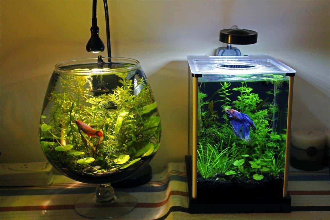 Aqu rio redondo porque n o usar e 10 alternativas mais for Betta fish tank ideas