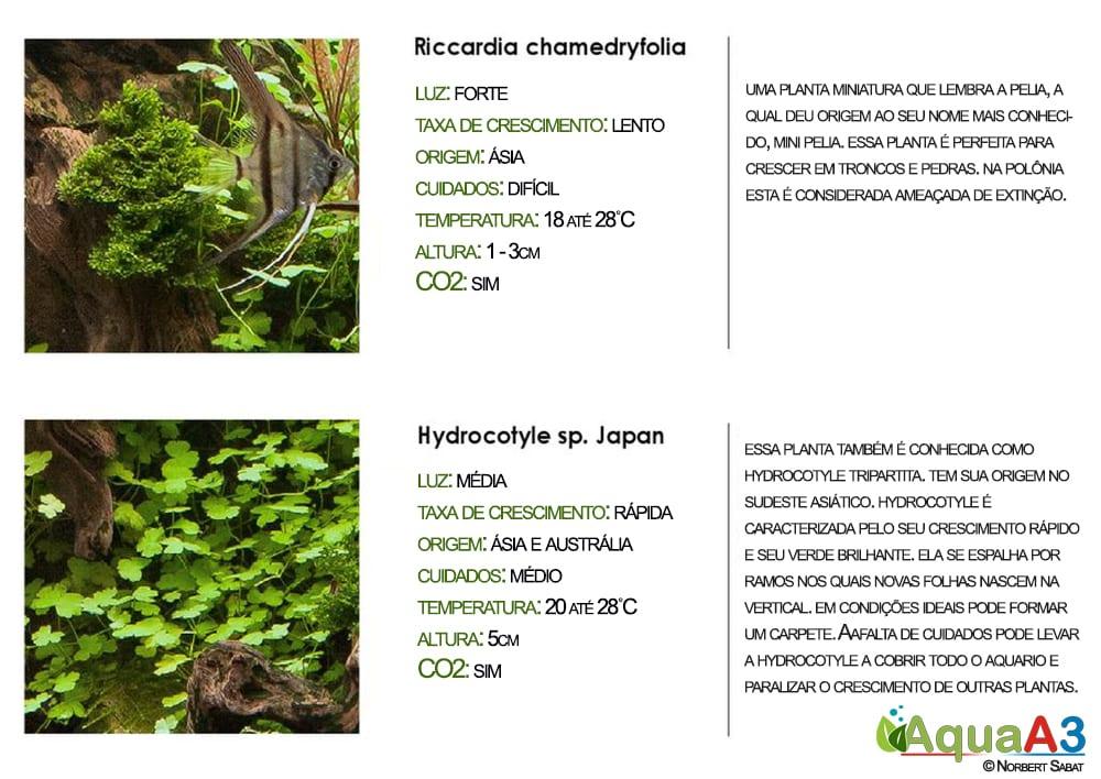 Riccardia e Hydrocotyle