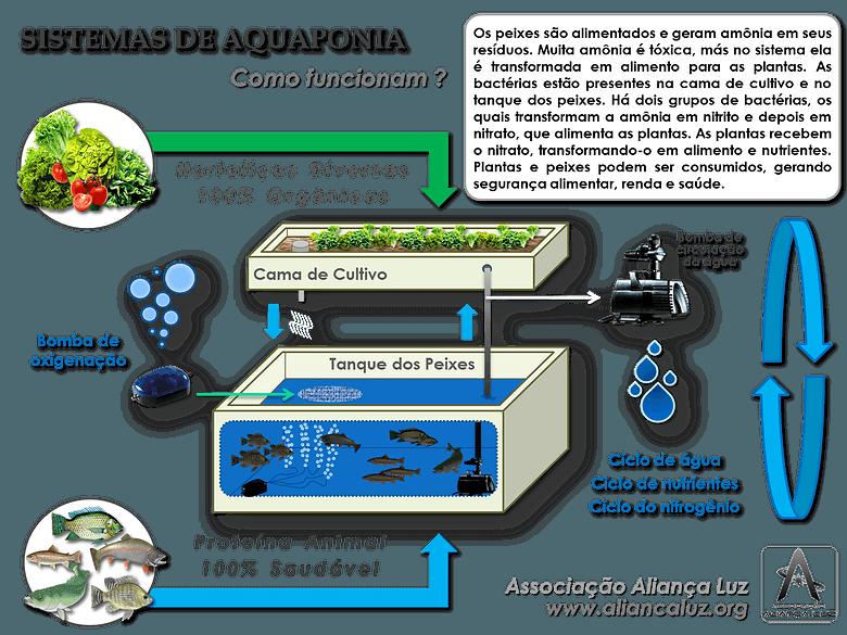 Vídeo Aquaponia Criação de peixes integrada ao cultivo de vegetais