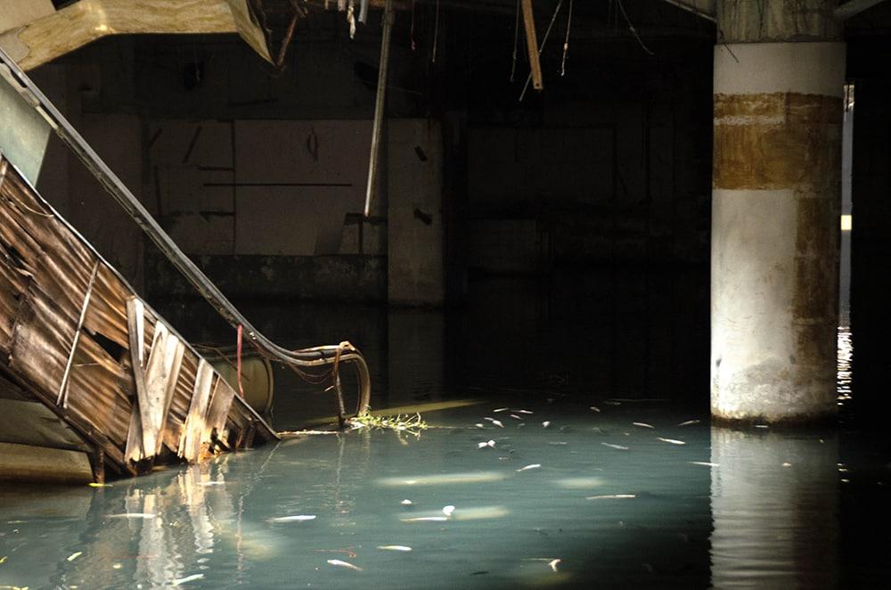 inundação no shopping vira santuário de peixes na Tailândia 2