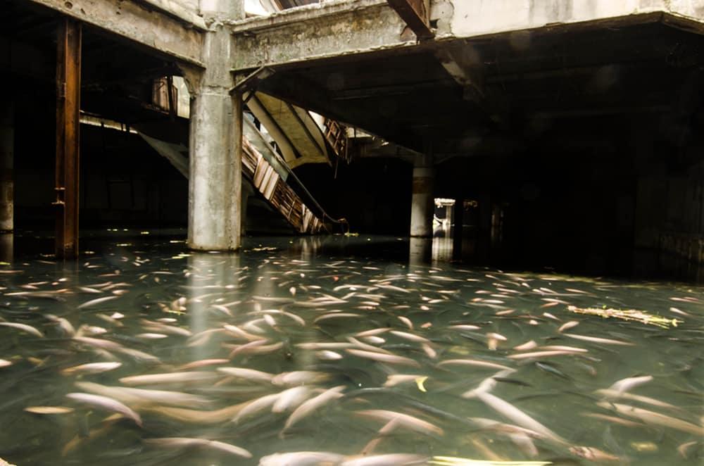 inundação no shopping vira santuário de peixes na Tailândia 3