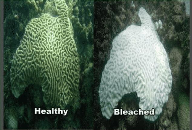 Alerta: O Aquecimento global danifica corais vitais, diz ONU.