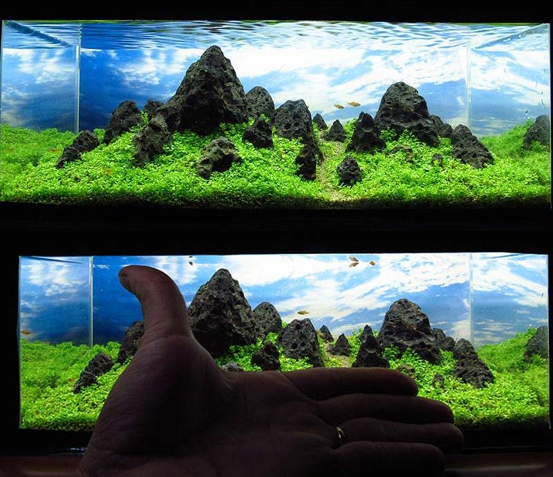 2 Vu Ngoc Quy • Aquapaisagismo: Top 10 Aquários em miniaturas