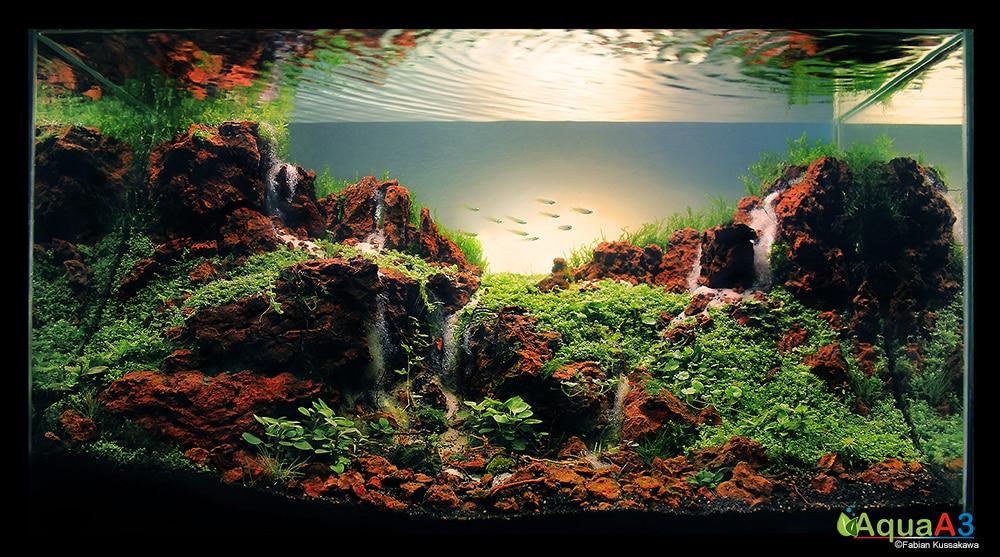 3° Lugar - Fabian Kussakawa  - CPA Aquapaisagismo 2014