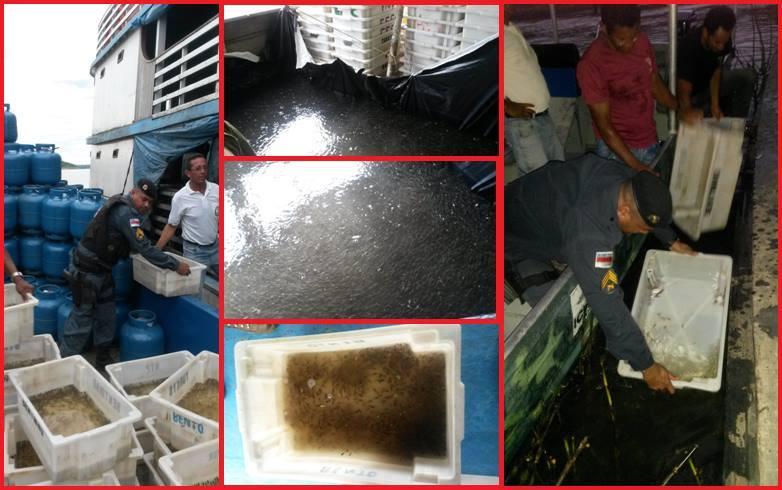 Apreensão de aproximadamente 500 mil peixes no Rio Purus