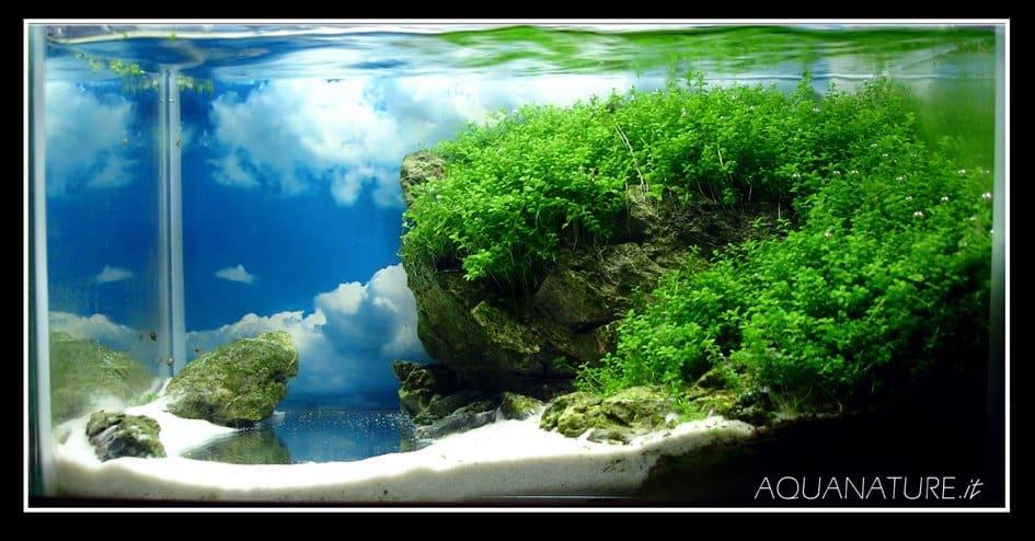Aqua miniatura
