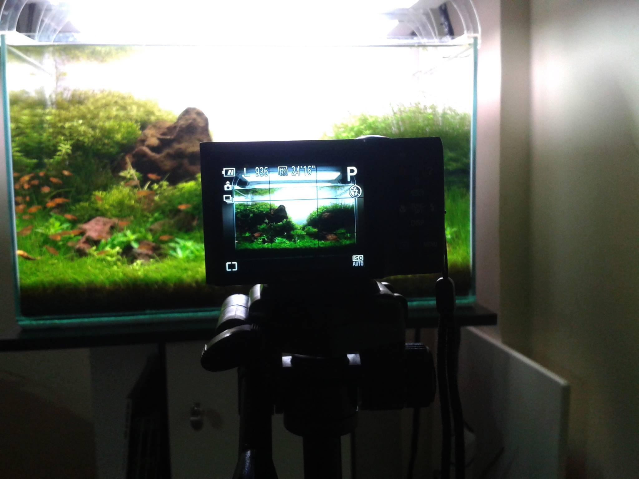 Aquapaisagismo - Fotografe para vencer
