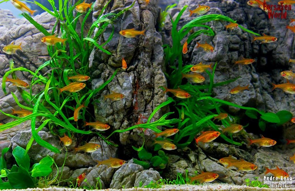 Evolução Forsaken World de Pedro Rosa flora 1