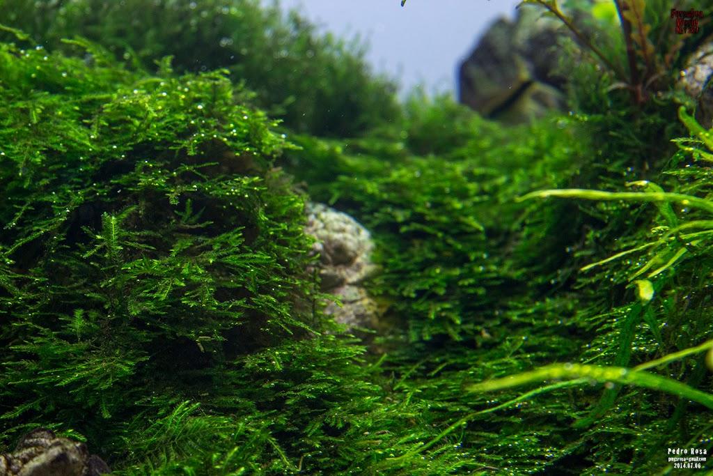 Evolução Forsaken World de Pedro Rosa flora 3