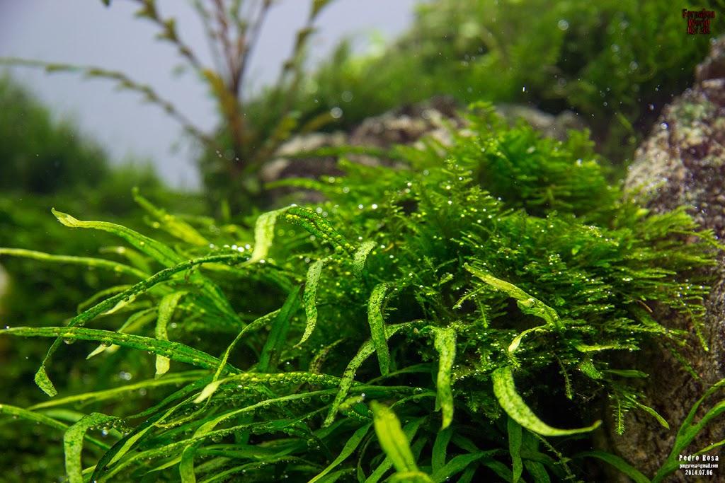 Evolução Forsaken World de Pedro Rosa flora 4