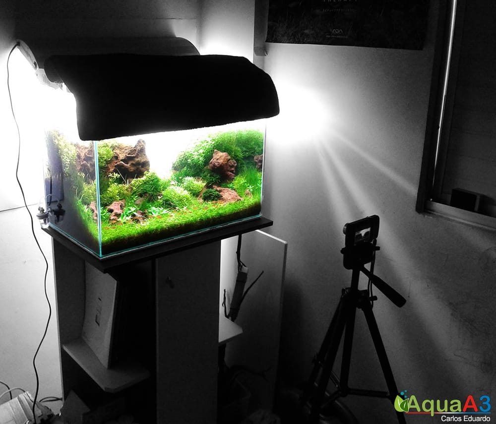 Fotografia aquapaisagismo