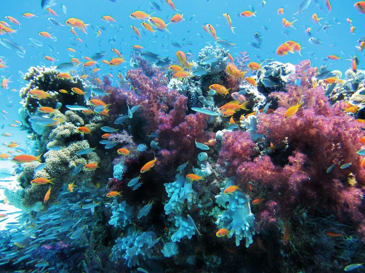 Herpes em coral marinho
