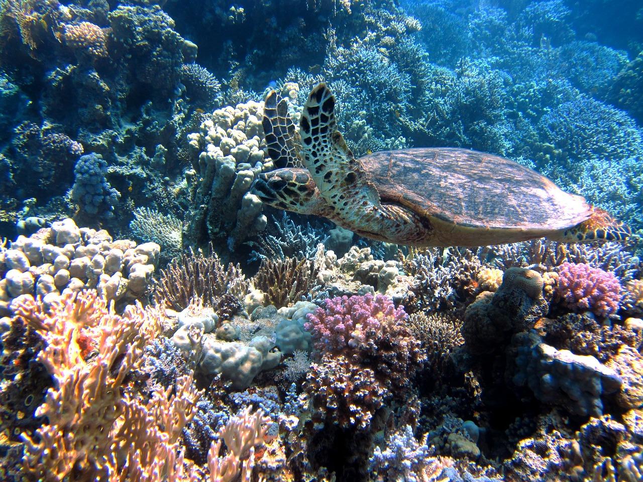 Herpes está destruindo nossos corais