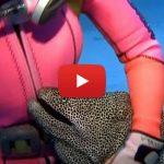 Moreia interagi amigavelmente com mergulhadora • Vídeo: Moreia interage amigavelmente com mergulhadora