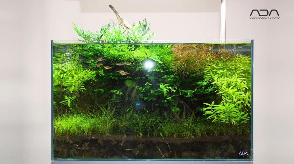 flash aquário plantado aquapaisagismo