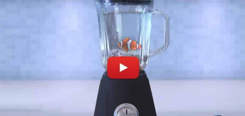 peixe palhaço no liquidificador greenpeace