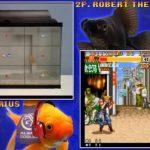 Peixe vs peixe no Street Fighter 2 • Jogo: Peixe vs peixe no Street Fighter 2