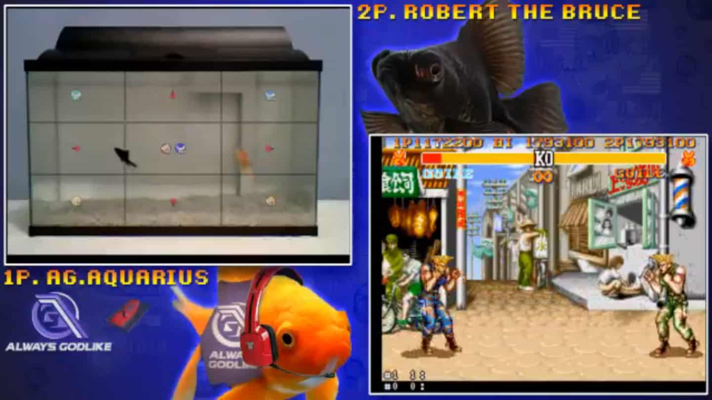 Peixe vs peixe no Street Fighter 2