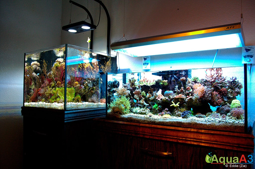Seahorse Utopia Room