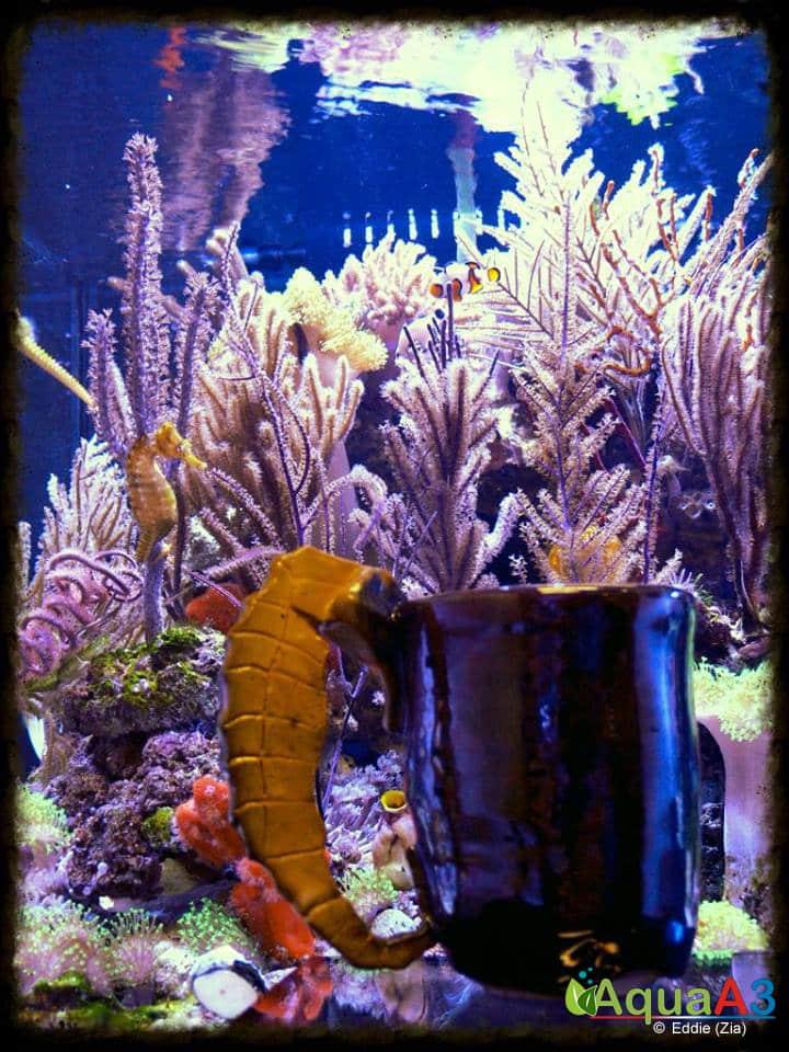 Seahorse Utopia dicas aquario