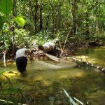 coleta de peixes ornamentais projeto igarape • Opinião: A verdadeira produção sustentável