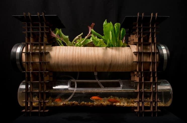 mini-horta Aquaponia