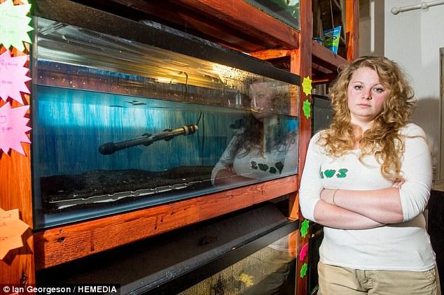 300 peixes morrem em ataque suspeito em um PET shop