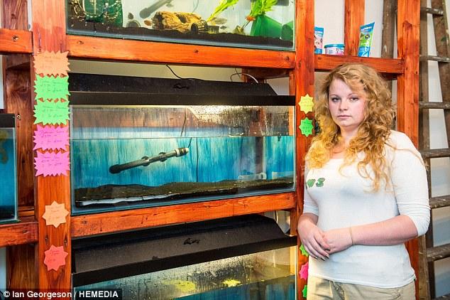 Centenas de peixes tropicais envenenados em tanques com líquido tóxico em um ato deliberado de sabotagem.