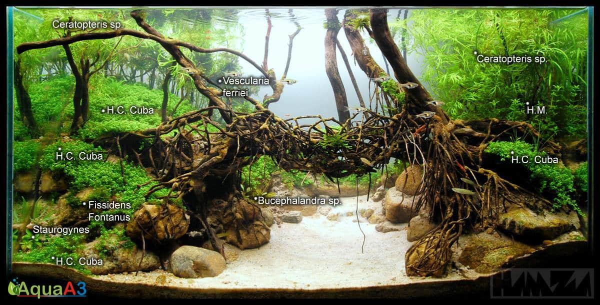 Evolução The Living Bridge de Hamza Syed (215º IAPLC 2014) flora