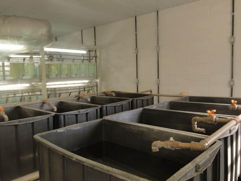 Laboratório de peixes ornamentais está sendo implantado na Escola de Veterinária
