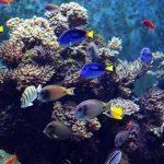 MPA simplifica transporte de peixes ornamentais • MPA simplifica transporte de peixes ornamentais