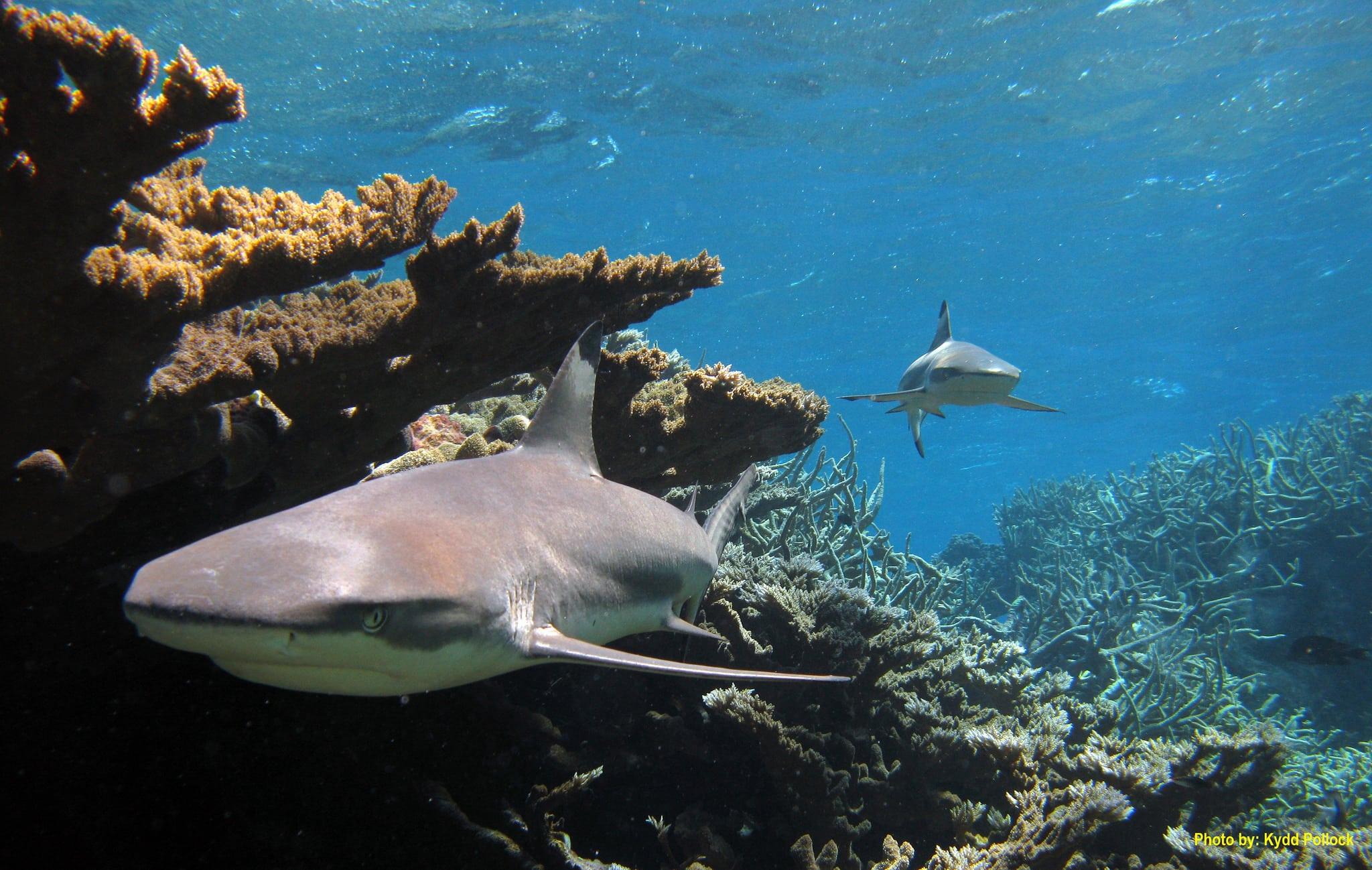 Obama cria o maior santuário oceânico do mundo no oceano Pacífico Central
