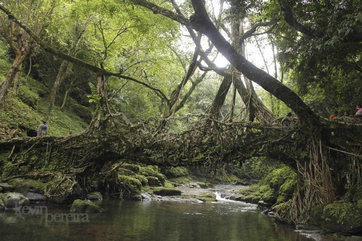 The Living Bridges of Meghalaya Hamza Syed 215º IAPLC 2014