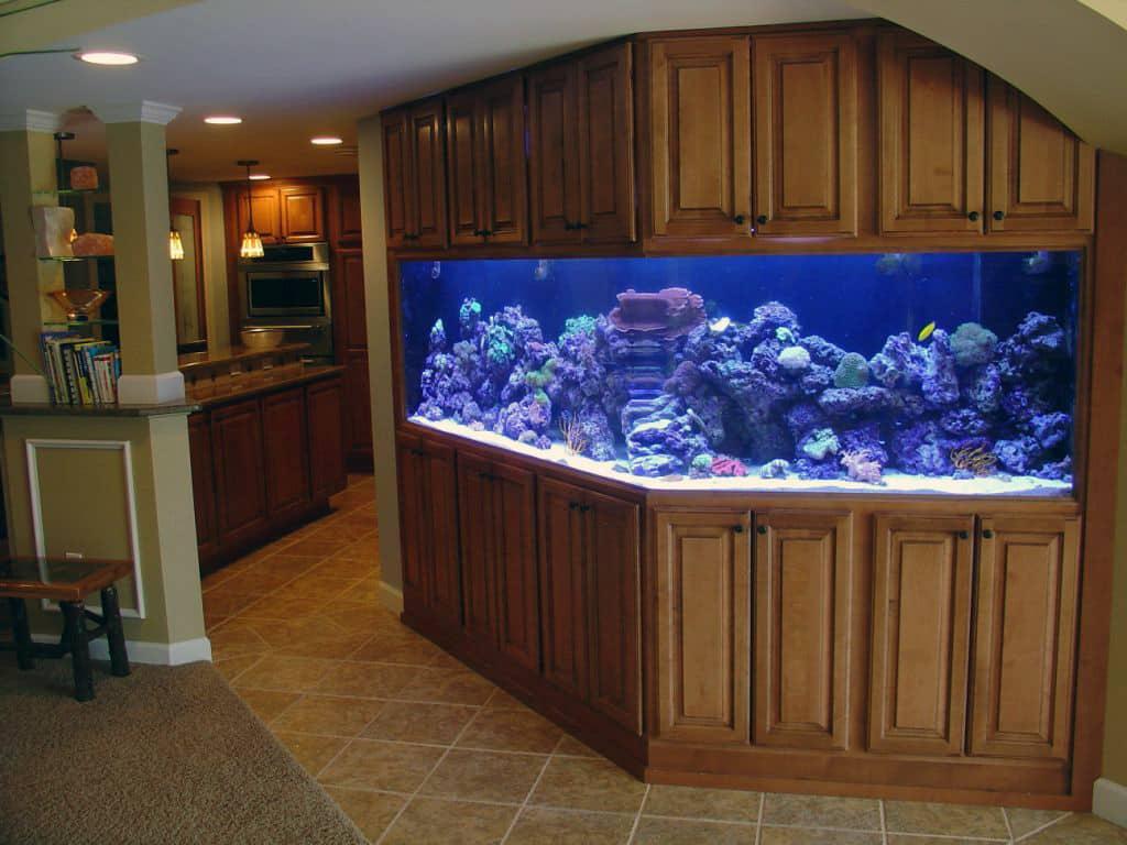 aquarium kitchen - Arron Lucky (aquario na cozinha)