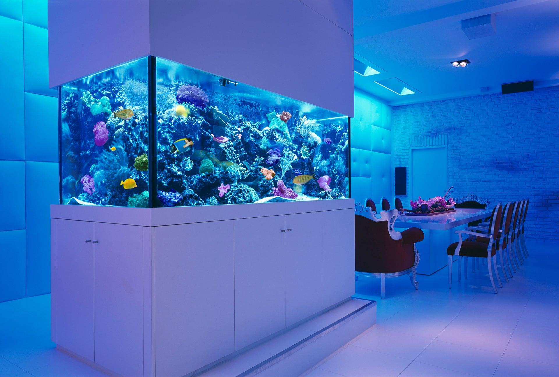 aquarium kitchen (aquario na cozinha)