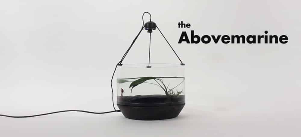 O Abovemarine - Betta aprende a 'dirigir' em aquário motorizado