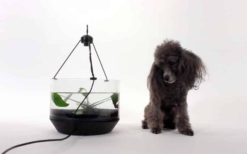 O Abovemarine - Betta aprende a 'dirigir' em aquário motorizado cachorro
