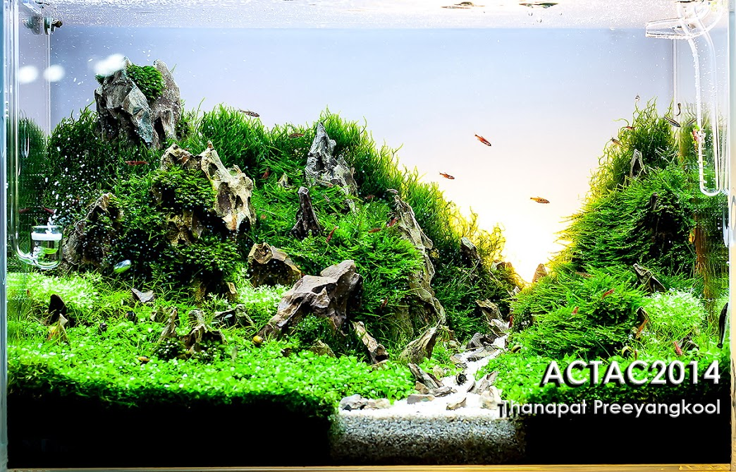10º Thanapat Preeyangkool -Resultado ACT (Aquascaper Club of Thailand) 2014