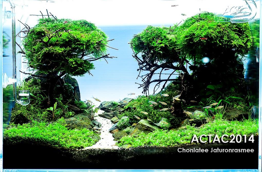 2º  Chonlatee Jaturonrasmee - Resultado ACT (Aquascaper Club of Thailand) 2014